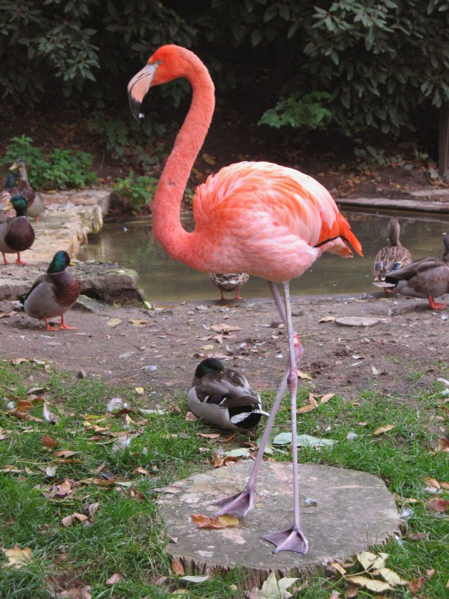 10-09-columbus-flamingo